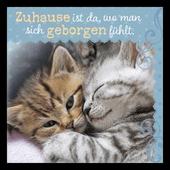 35x70_Mikro_Katzen